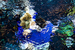Scottish music star Darius Campbell & actress wife Natasha Henstridge take part in under water photo shoot at the Edinburgh Royal Commonwealth Pool to commemorate World Water Day 2013.