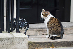 Larry the cat outside Downing Street, London, after a cabinet meeting ahead of the official triggering of article 50. Picture date: Wednesday March 29th, 2017. Photo credit should read: Matt Crossick/ EMPICS Entertainment.