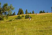 Climb to Harsin Butte - 5529 feet
