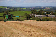 Combine harvester processing wheat in a field during harvest, farmhouse in background, UK food industry, Devon, UK
