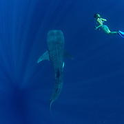 Tourist diving with a whale shark (Rhincodon typus) , Honda Bay, Palawan, the Philppines