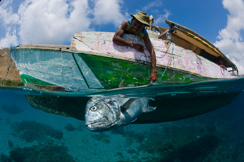 Despite officially protected, Komodo National Park in Indonesia is subject to illegal fishing. Here, a poacher proudly displays his prized catch, a giant trevally (Caranx ignobilis), an apex predator of the coral reef. Photo taken while snorkeling.