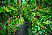Jungle trail at Hawaii Tropical Botanical Garden, Hamakua Coast, The Big Island, Hawaii
