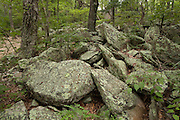 Trees and granite stones in Fort Mountain State Park in the Chattahoochee National Forest, Georgia.