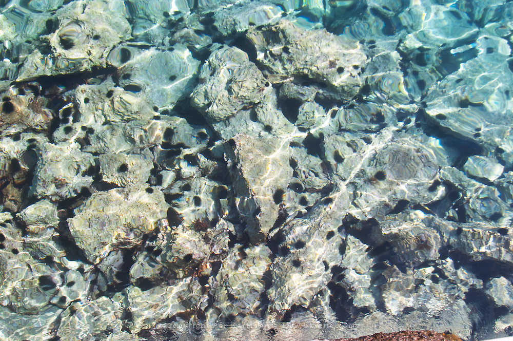 Rocks and sea urchins seen through glittering water at the beach. Orebic town, holiday resort on the south coast of the Peljesac peninsula. Orebic town. Peljesac peninsula. Dalmatian Coast, Croatia, Europe.