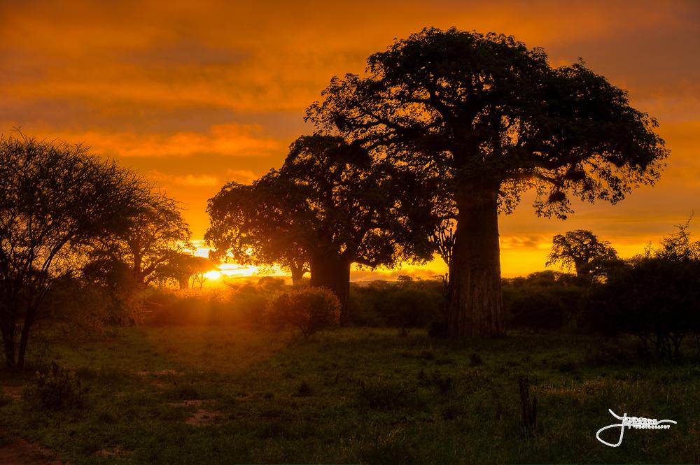 Sunrise in Tarangire
