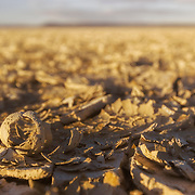 Ground level view of dried mud on the lakebed of the Alvord Desert, Oregon, highlighted by the golden glow of sunset
