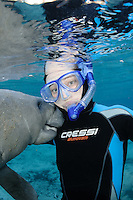 Florida manatee, Trichechus manatus latirostris, a subspecies of the West Indian manatee, endangered. A female snorkeler has a curious female manatee rub it's snout on her wetsuit on a cool Florida day. Facing forward towards viewer. Vertical orientation and polite, passive observation, no touch. Even when no-touch observations are practiced some manatees are overly curious. Three Sisters Springs, Crystal River National Wildlife Refuge, Kings Bay, Crystal River, Citrus County, Florida USA.