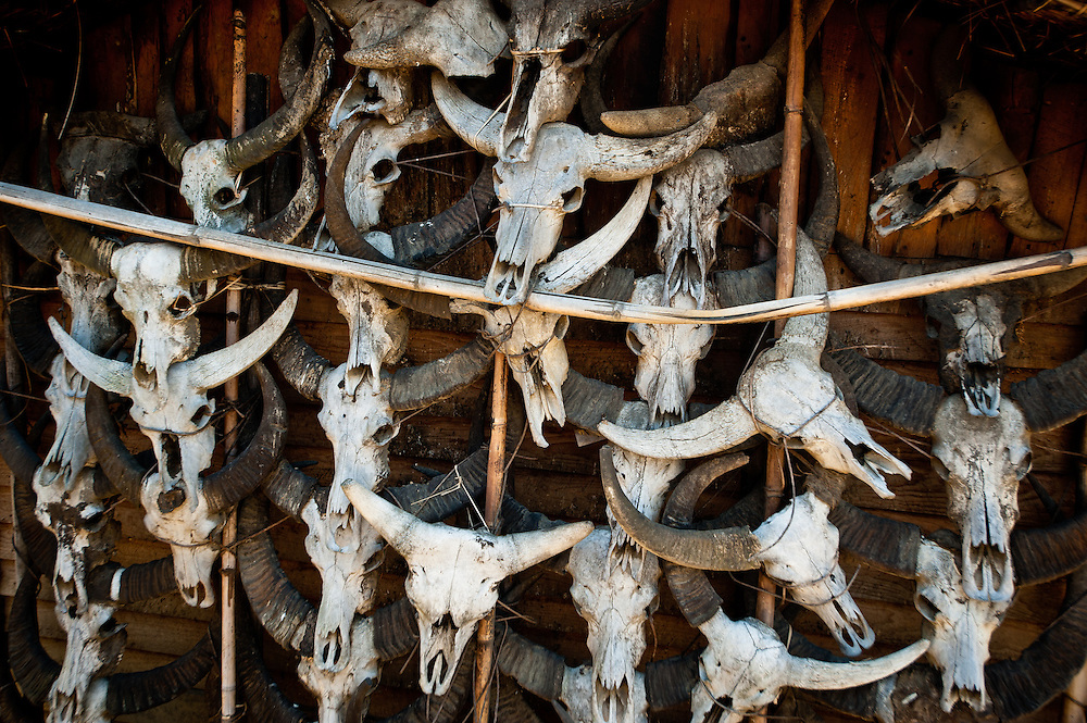 Water buffalo and mithan skulls hanging on the exterior wall of a home in Pansar indicate the owners status as a rich man who has given many Feasts of Merit.