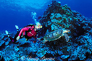 diver and hawksbill sea turtle,<br /> Eretmochelys imbricata, <br /> at Sea Fans dive site, Tu'ungasika Island,<br /> Vava'u, Tonga, South Pacific  MR 273