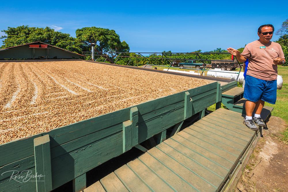 Farmer describing the coffee beans drying process, Kona Coast, The Big Island, Hawaii USA