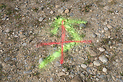 yellow arrow with red cross painted over it on the ground