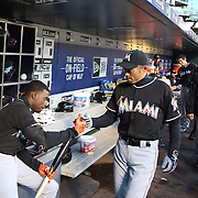 NEW YORK, NEW YORK - APRIL 12: Ichiro Suzuki, Miami Marlins, in the dugout with team mate Dee Gordon, (left),  during the Miami Marlins Vs New York Mets MLB regular season ball game at Citi Field on April 12, 2016 in New York City. (Photo by Tim Clayton/Corbis via Getty Images)