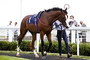 Pink Flamingo ridden by Joey Haynes and trained by Michael Attwater - Mandatory by-line: Robbie Stephenson/JMP - 18/07/2020 - HORSE RACING- Bath Racecourse - Bath, England - Bath Races 18/07/20