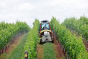 Barboursville Winery in Barboursville located in Orange County, Virginia.