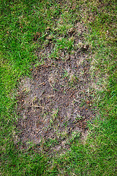 Example of bare patch on a lawn in need of repair