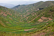 The farmland and terraces in Southwest region Uganda.