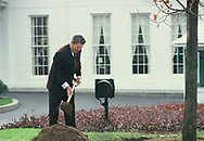 Washington, DC 1984/12/12 President Ronald Reagan plants a Sugar Maple Tree on the White House Grounds, <br /><br /><br />Photo by Dennis Brack