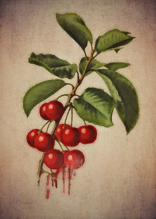 When you look at this fine art piece depicting a small assortment of cherries, what are some thoughts that spring to mind? You can interpret this piece in several interesting ways. There is a certain rock and roll element that one can take from this. At the same time, cherries can have many different meanings for different people.<br /> -<br /> BUY THIS PRINT AT<br /> <br /> FINE ART AMERICA<br /> ENGLISH<br /> https://janke.pixels.com/featured/cherries-jan-keteleer.html<br /> <br /> WADM / OH MY PRINTS<br /> DUTCH / FRENCH / GERMAN<br /> https://www.werkaandemuur.nl/nl/shopwerk/Kersen---Antieke-tekening-van-kersen/479621/134