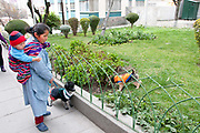 Bolivia June 2013. La Paz. Domestic worker walking the dog with a baby on her back
