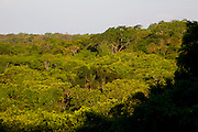Sao Jose do Rio Preto_SP, Brasil...Programa Biota da Unesp, na foto uma paisagem...The Biota program of Unesp, in this photo the landscape.. .Foto: JOAO MARCOS ROSA /  NITRO