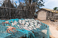 Fish drying in the sun as a staple diet, Quifuki Island, Mozambique