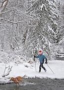 Alaska. Anchorage. Holiday Nordic Skiing along Campbell Creek.