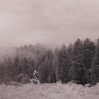 Morning Mist at Prairie Creek Ca