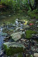 A rain forest stream, Halmahera Island, Indonesia.