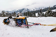 Musher Katherine Scheck, of Yukon, Canada, takes a spill but holds on to her sled during the Alpine leg of the Pedigree Stage Stop Race in Alpine, Wyoming on Saturday, January 26, 2019. Scheck finished in 19th place with a time of 18 hours, 19 minutes and 51 seconds at the conclusion of the seven day stage stop race. (Rebecca Noble/Jackson Hole News&Guide)