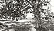 Late Afternoon backlit Trees, Ohio, USA