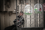 Bird seller. Baku. 2010.