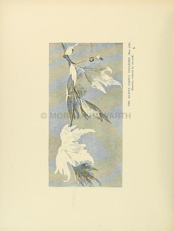 British trees /<br /> London :Hutchinson,1907.<br /> https://biodiversitylibrary.org/page/33503372
