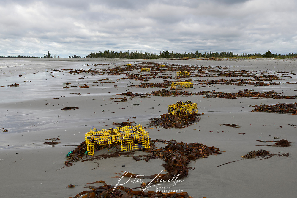 Damaged lobster cages strewn along beach after being ripped form seabed by Hurricane Dorian Cherry Hill Beach, Nova Scotia, Canada