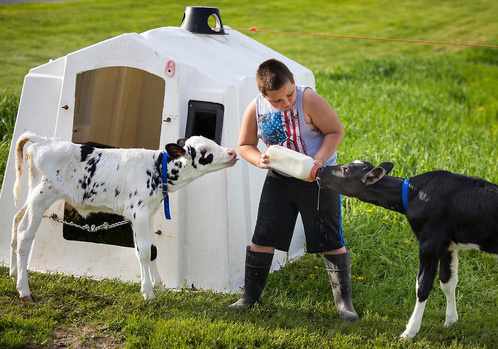 Ryan Schlies bottles feeds calves at Old Settler's Dairy Near Denmark, Wisconsin.