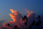 Coconut palm trees silhouetted against Cumulonimbus cloud formation at sunset. Sanur, Bali, Indonesia.