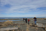 Birding the Straits of Juan de Fuca during gall migration. Photo by Donna J. Hahn.