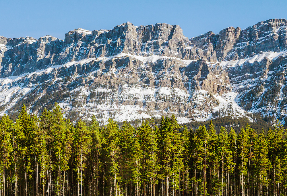 A view of a row of trees in front of Castle Mountain in the Rocky Mountains near Banff, Alberta, Canada.<br /> <br /> + ART PRINTS +<br /> To order prints or cards of this image, visit:<br /> http://greg-stechishin.artistwebsites.com/featured/castle-mountain-greg-stechishin.html