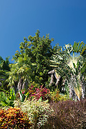 Colourful tropical foliage around Ravenala madagascariensis (Travelers' Palm) in Hyde Park Garden, St. George's, Grenada, West Indies,The Caribbean
