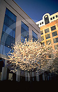 Harrisburg, PA, Front and Market Street City Scape, Springtime, Penn Mutual Insurance Building