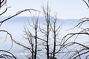 Dead tree snags are silhouetted against the blue haze that fills the valley below Grand Teton National Park, Wyoming.