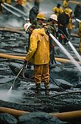 Alaska. Exxon Valdez oil spill, Snug Harbor. Steam cleaning flushes oil that has percolated into the beach.