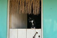 Cat in Window, Trinidad, Cuba 2020 from Santiago to Havana, and in between.  Santiago, Baracoa, Guantanamo, Holguin, Las Tunas, Camaguey, Santi Spiritus, Trinidad, Santa Clara, Cienfuegos, Matanzas, Havana