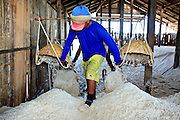 Mar 23, 2009 -- SAMUT SONGKHRAM, THAILAND: Workers dump baskets of salt in a warehouse on a highway near Samut Songkhram, Thailand. Each basket weighs between 30 and 50 kilograms (66 to 100 pounds) and they carry two baskets on each trip. The salt farms between Samut Sakhon and Sumat Songkhram are Thailand's largest salt producing region. Salt is typically harvested for about six months of the year. The fields are prepared for salt farming as soon as the rainy season ends. First the fields are tamped down so they hold water, then they are flooded with salt water from either the Gulf of Siam or the Mae Khlong River (both are salty). After about two months, the first harvest is ready. The fields are drained and the salt picked up from the fields. Then the fields are flooded again and the process repeated. As the season goes on and the fields become saltier, the amount of time they are flooded is reduced till the end of the season when they may only be flooded for two or three days. Most of the workers in the salt fields are migrant workers from Isaan, an impoverished region in the northeast of Thailand. Once the rainy season starts and it's no longer possible to harvest salt the workers go home to work their small farms. The workers are paid based on the amount of salt their crew harvests.    Photo by Jack Kurtz