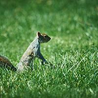 20180422-squirrel