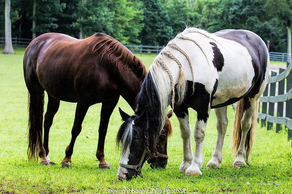 Kendall & Berri grazing