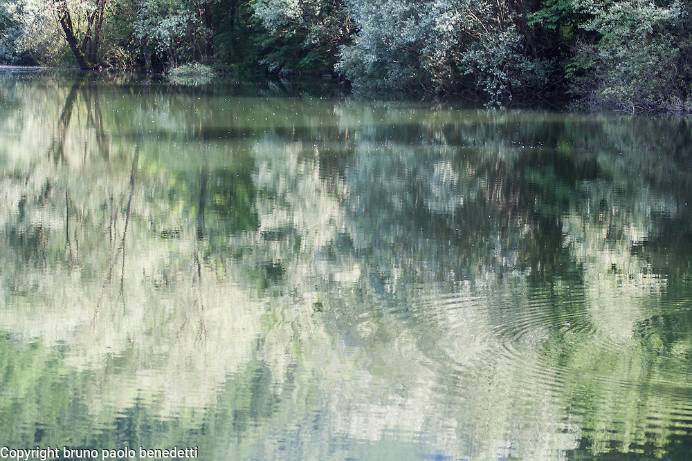 green reflections of trees in still water of a pond. Some little waves move the water