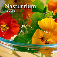 Nasturtium Recipe Picture. Eating nasturtium Photos & Images