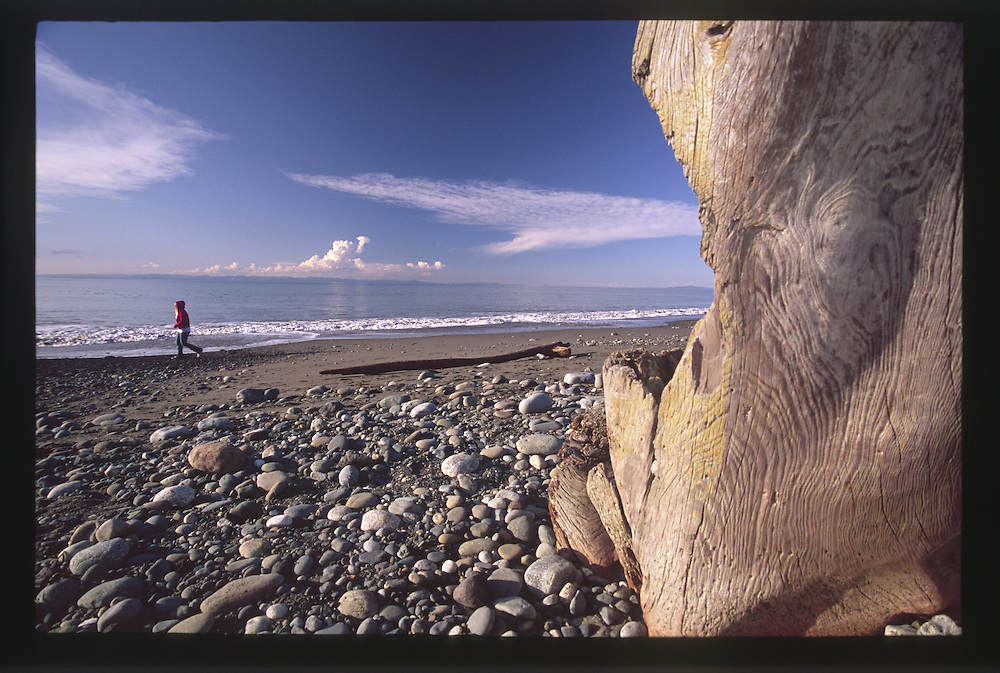 Sculptural Driftwood on the Dungeness Spit, Dungeness National Wildlife Refuge, Olympic Peninsula, Washington, US
