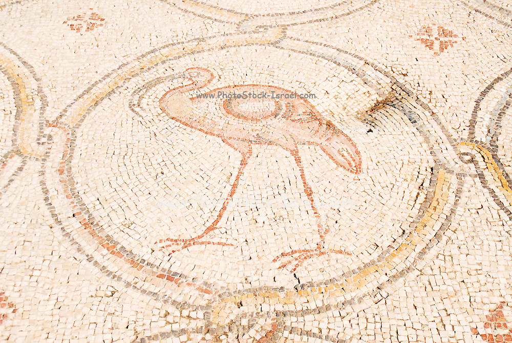 The Palace of the 'Bird Mosaic' a 14.5 x 16m floor of a villa dating to the Byzantine period, 6-7th century CE. Caesarea, Israel. Flamingo detail